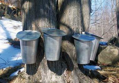 Канадский кленовый сироп: из чего делают, состав, польза и вред